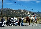 horses and harley